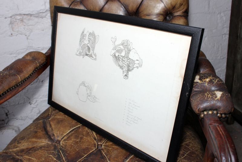 Framed Plate No.3; Anatomical Studies of Bones & Muscles, for the use of Artists; Flaxman/Landseer c.1833