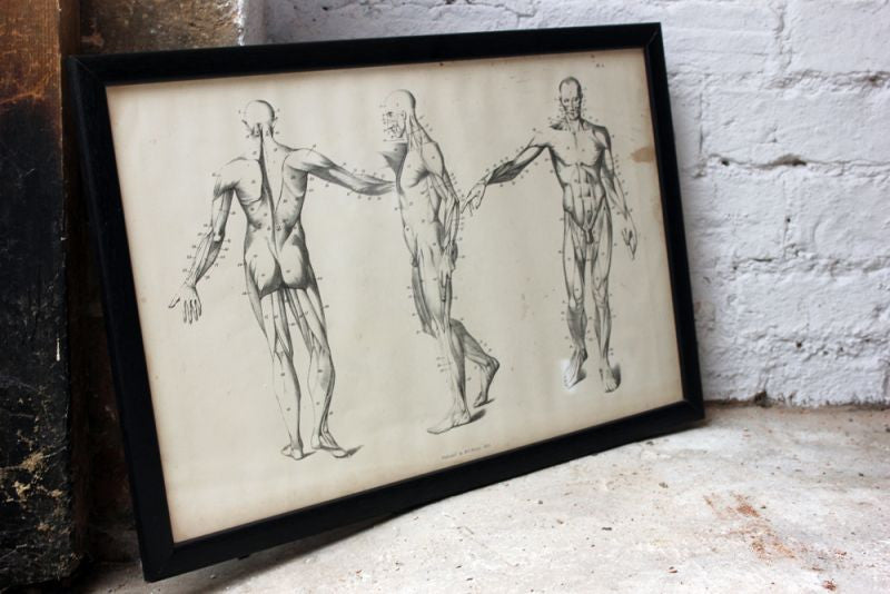Framed Plate No.2; Anatomical Studies of Bones & Muscles, for the use of Artists; Flaxman/Landseer c.1833