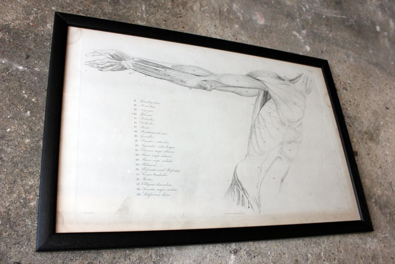 Framed Plate No.11; Anatomical Studies of Bones & Muscles, for the use of Artists; Flaxman/Landseer c.1833
