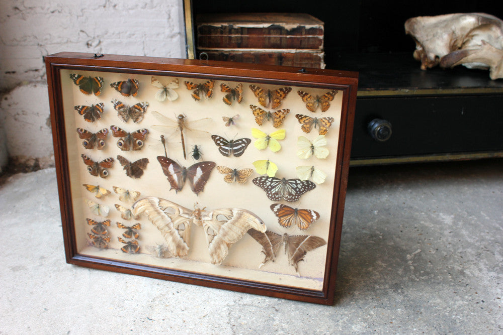 A Good c.1940s Framed Entomology Collection