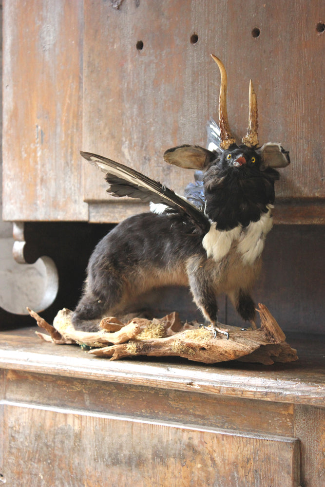 An Absurd Mid 20thC Taxidermy Freak; Being Part Polecat, Magpie & Roe Deer