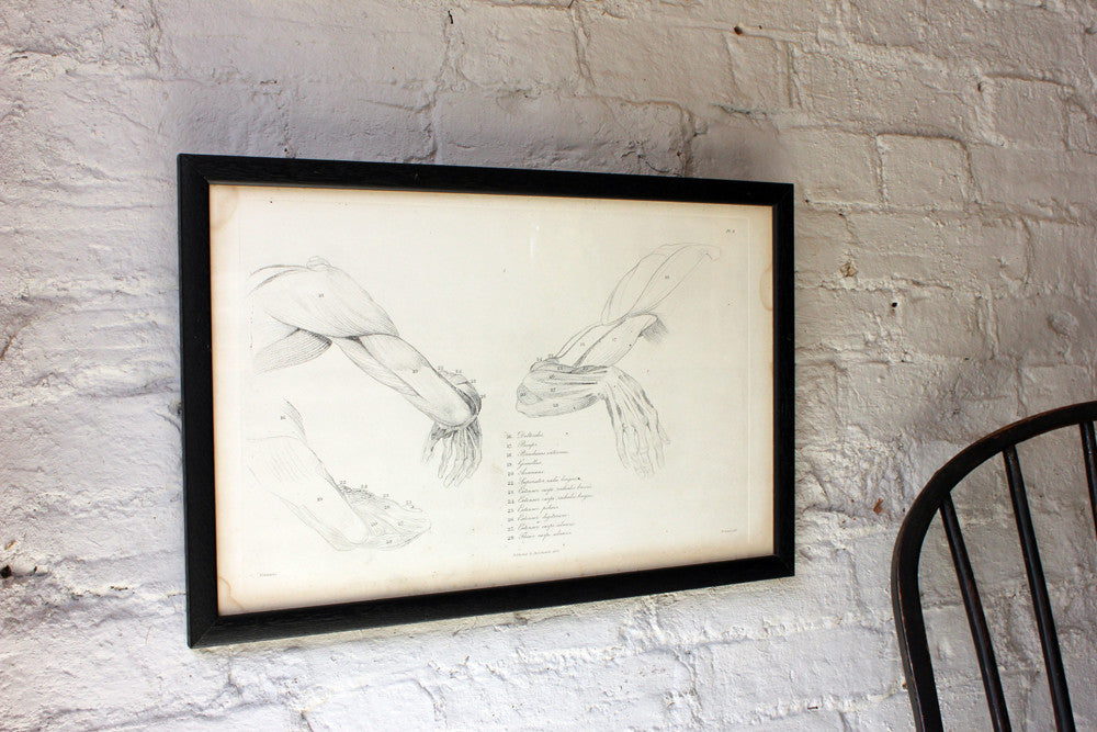 Framed Plate No.8; Anatomical Studies of Bones & Muscles, for the use of Artists; Flaxman/Landseer c.1833