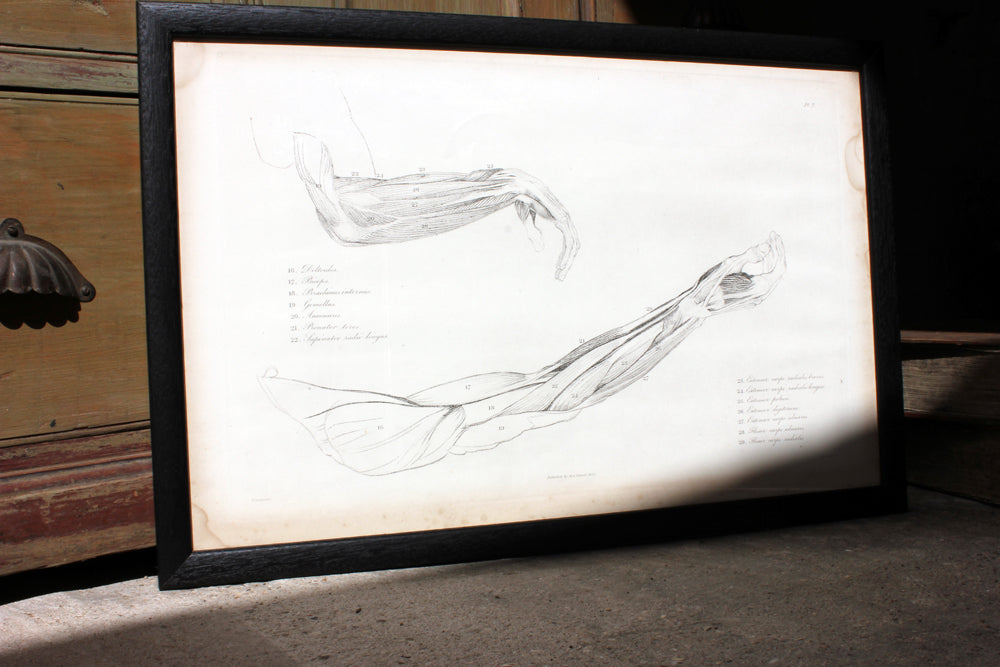 Framed Plate No.7; Anatomical Studies of Bones & Muscles, for the use of Artists; Flaxman/Landseer c.1833