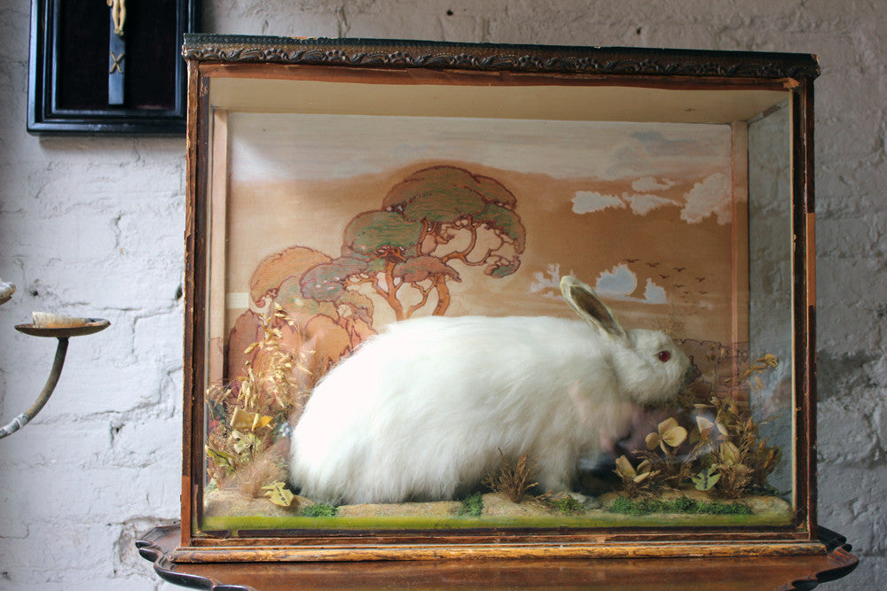 An Unusual Early 20thC Taxidermy Albino Rabbit in a Fantastical Glazed Display Case