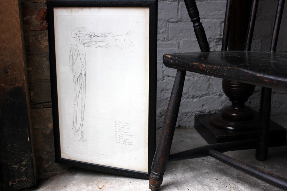Framed Plate No.20; Anatomical Studies of Bones & Muscles, for the use of Artists; Flaxman/Landseer c.1833