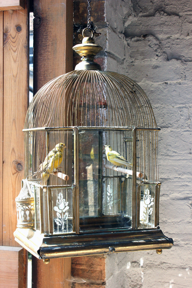 A Wonderful c.1870 Gilded Architectural Bird Cage with Ornithological Taxidermy Studies