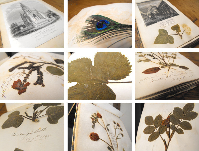 A Victorian Album of Wild Flower & Botanical Specimens, compiled by Anne Georgina Douglas between 1845-1855