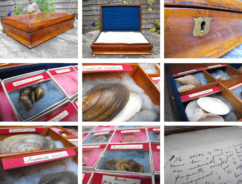 The Study of Slugs; A Unique 19thC Limacology Collection in a Cuban Mahogany Collectors Box