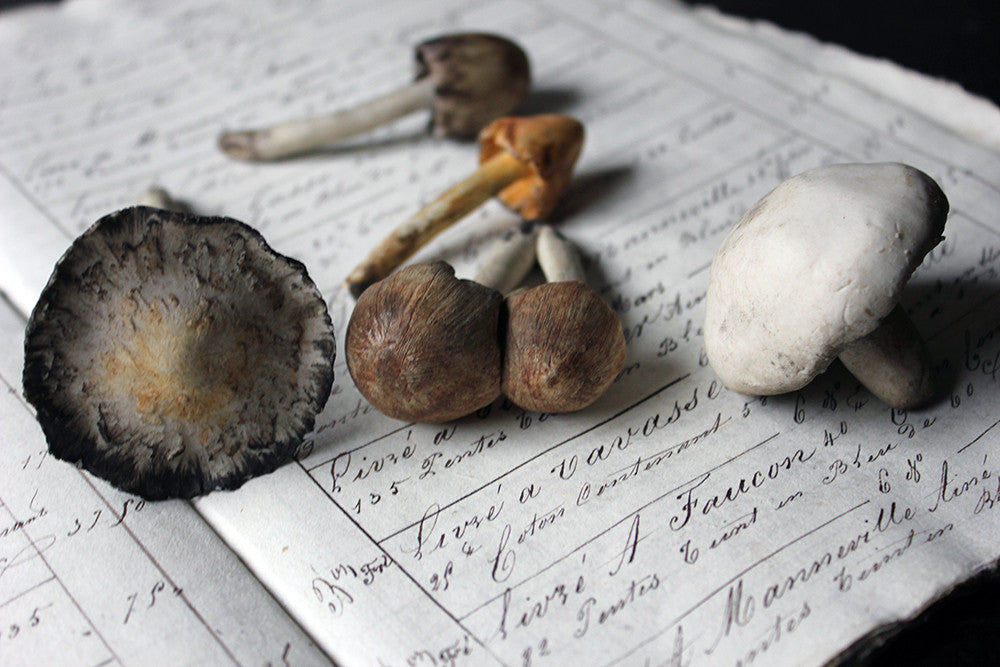 An Exquisite Collection of Five Late 19thC Ceramic Faux Mushrooms