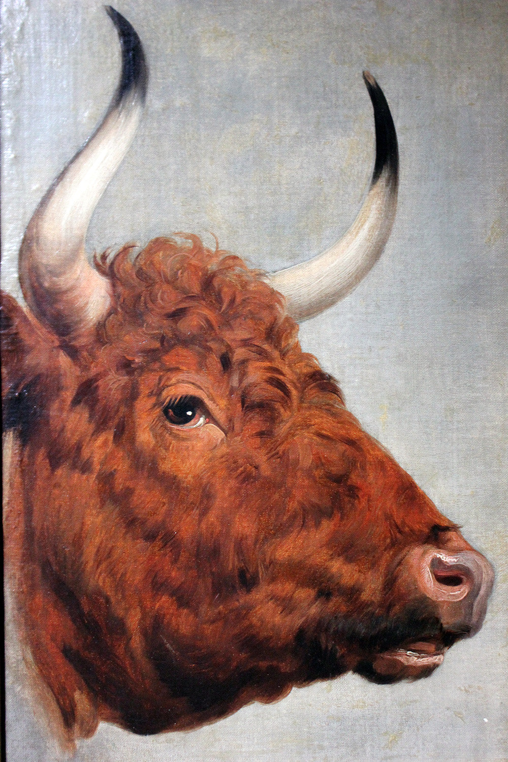 A 19thC English School Study of a Red Devon Bull