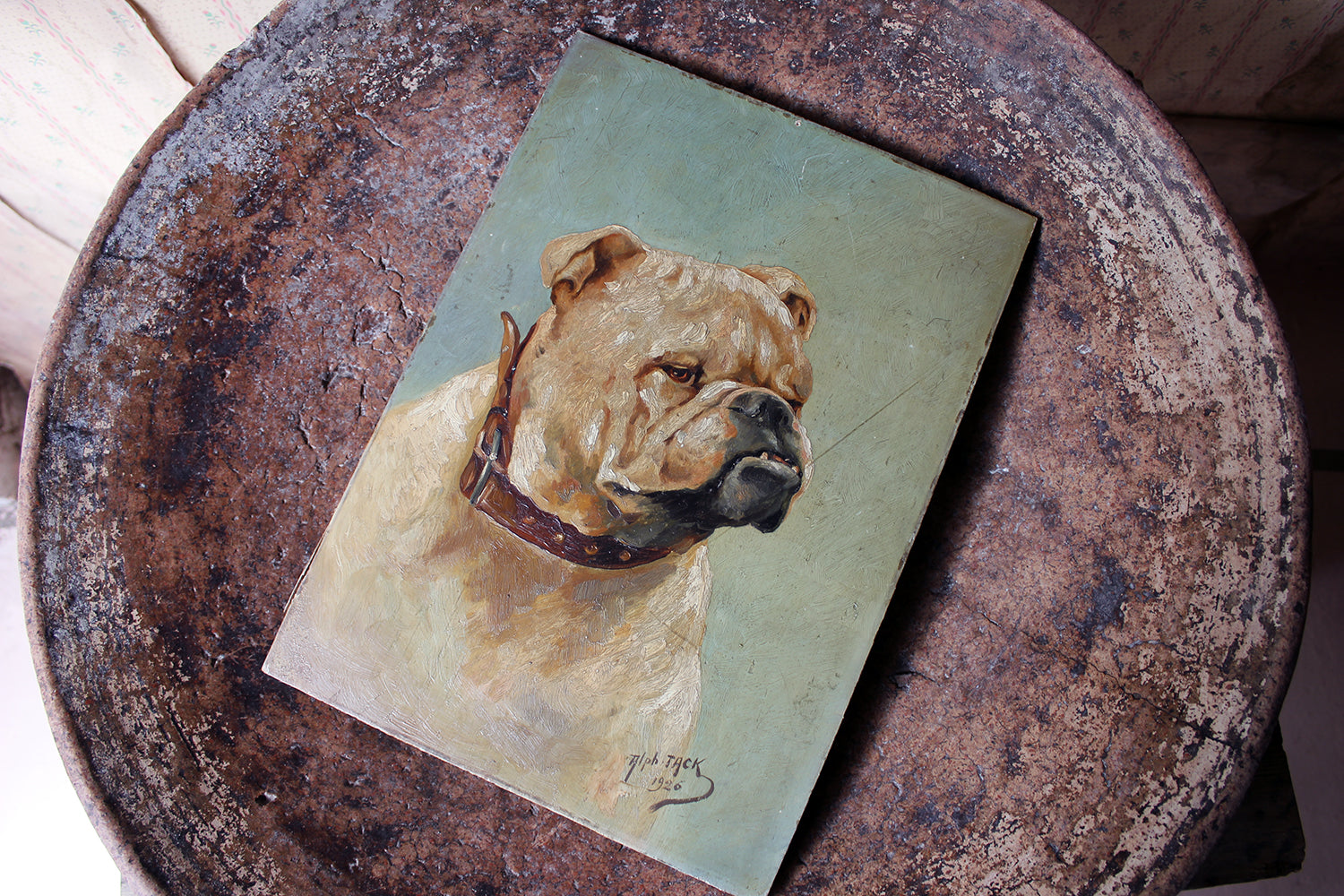 An Early 20thC Oil on Panel Study of an English Bulldog; Alph Jack 1926