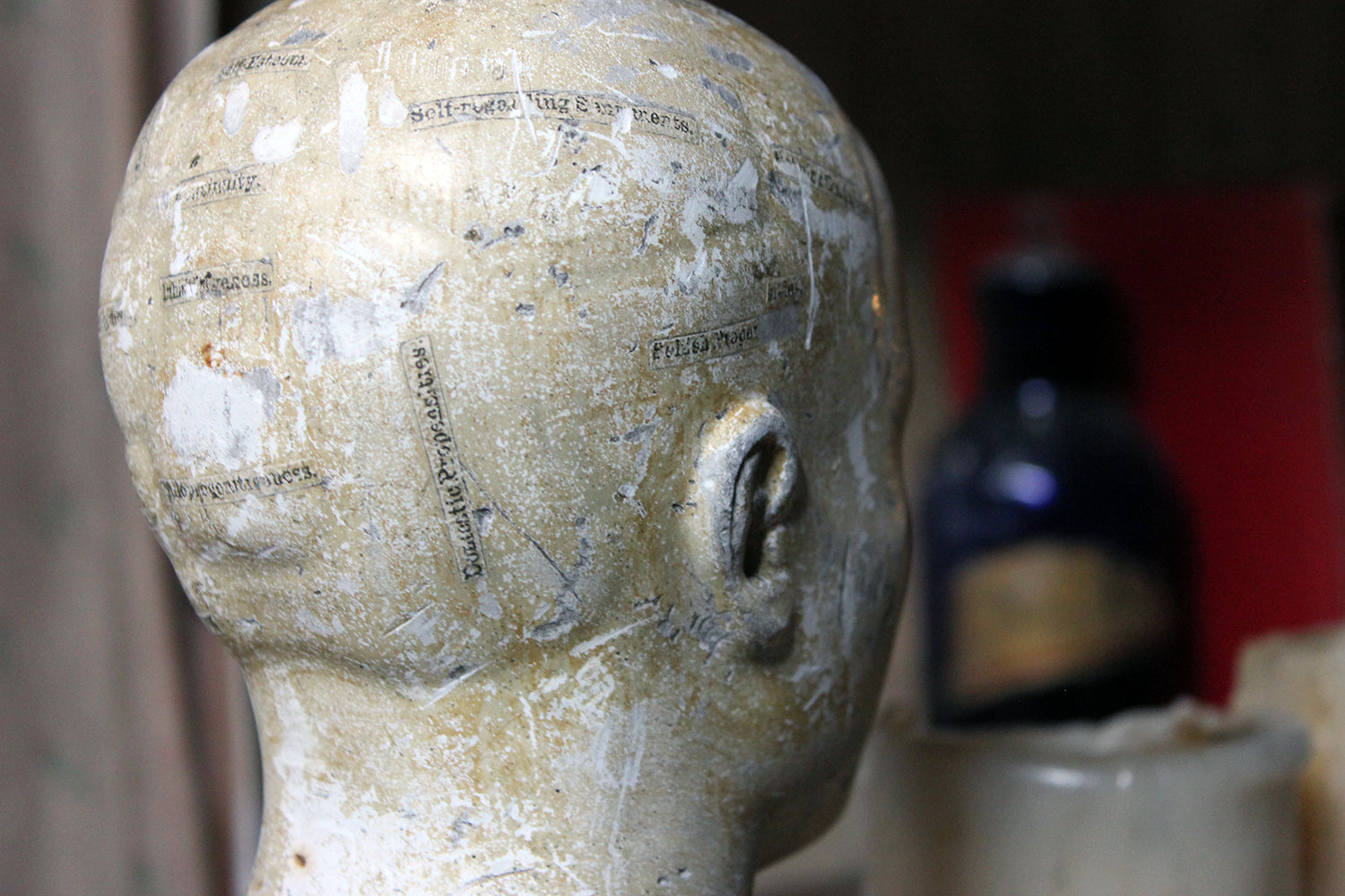 A Scarce Plaster Phrenology Bust Prepared by A.L. Vago (1839-1896) of Gray's Inn Road, London & Dated to 1883