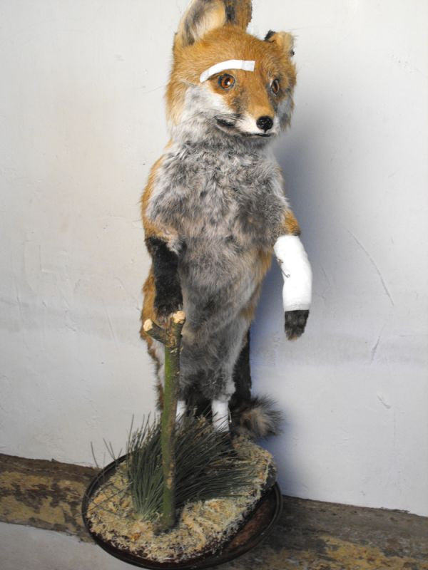 "A Mid-20thC Taxidermy of a Fox Cub; ""I Could Have Been Killed"""