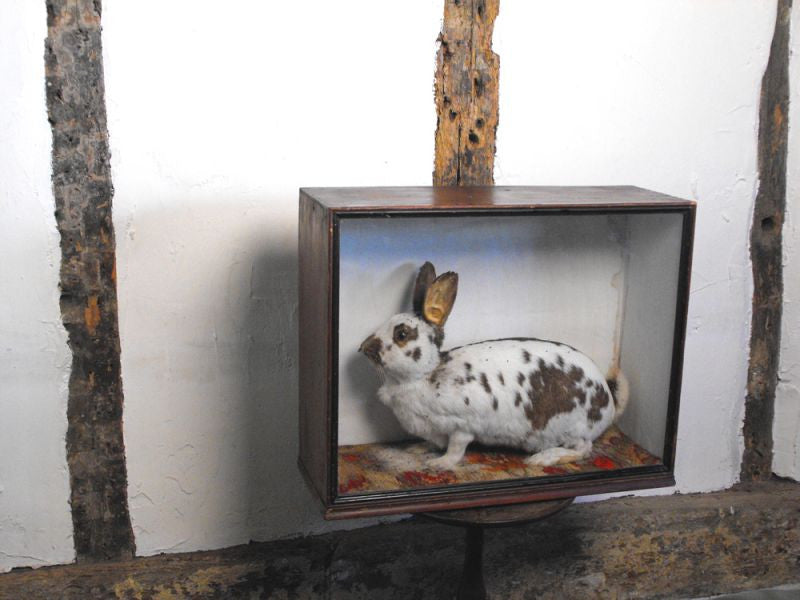 """The Leopard Rabbit""; A Sideshow Taxidermy Oddity in Glazed Case"
