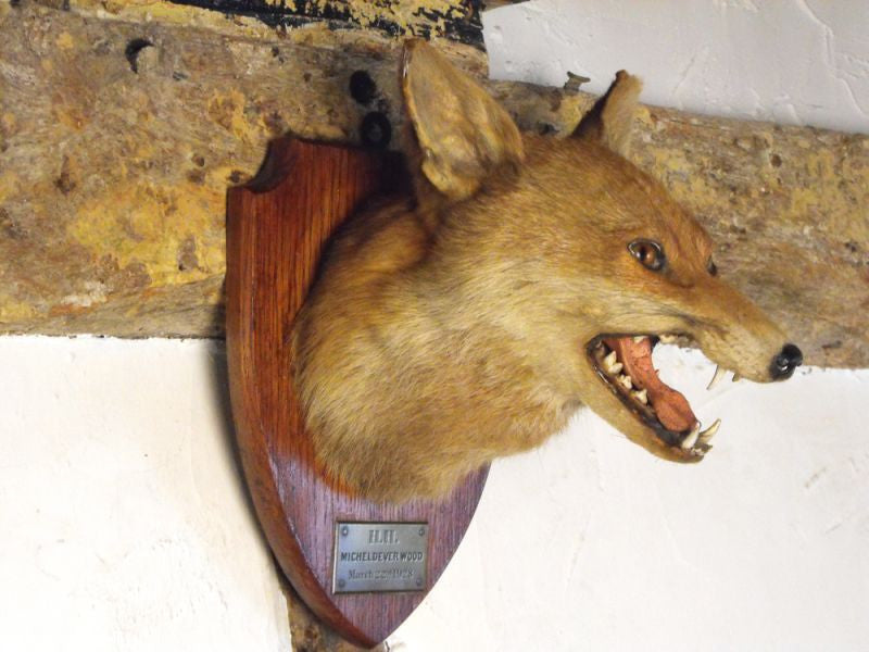 A Superb Early 20thC Mounted Taxidermy Fox Mask Dated to 1928