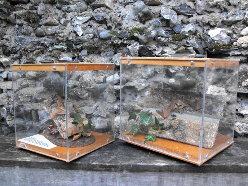 Two Rare Mid 20thC Cases of Preserved Taxidermy Bats