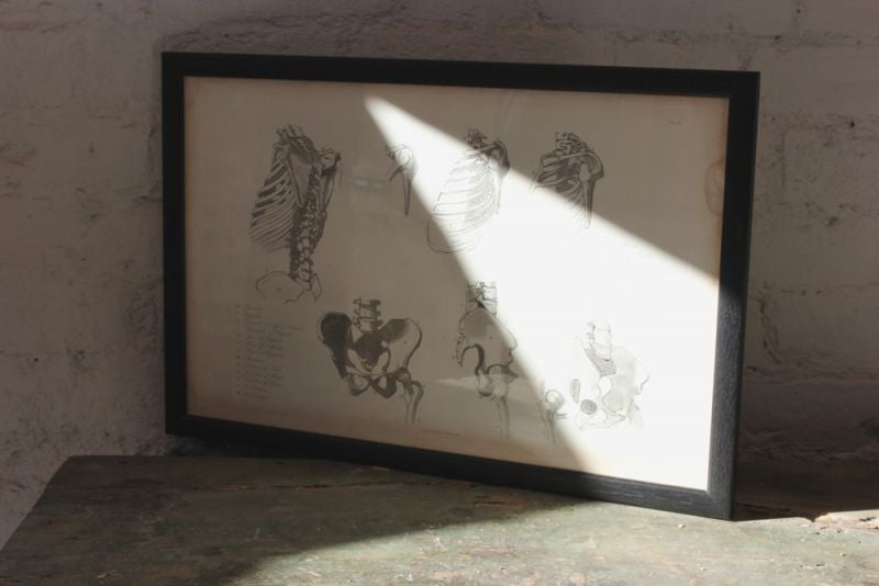 Framed Plate No.4; Anatomical Studies of Bones & Muscles, for the use of Artists; Flaxman/Landseer c.1833