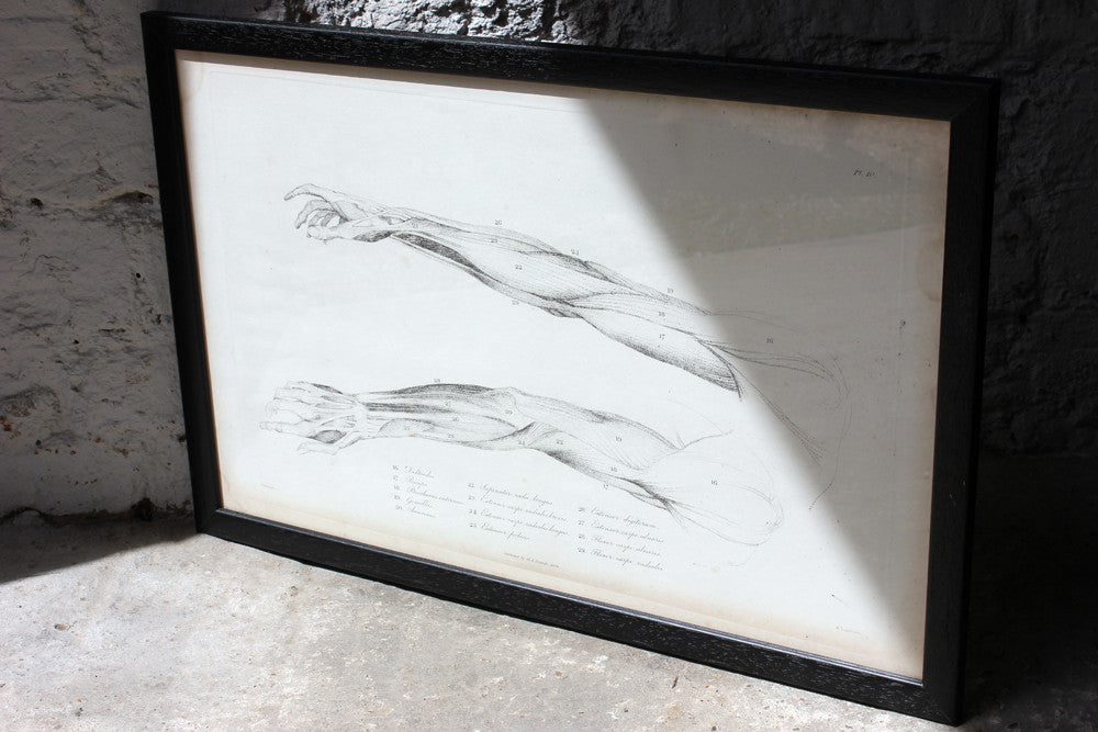 Framed Plate No.10; Anatomical Studies of Bones & Muscles, for the use of Artists; Flaxman/Landseer c.1833