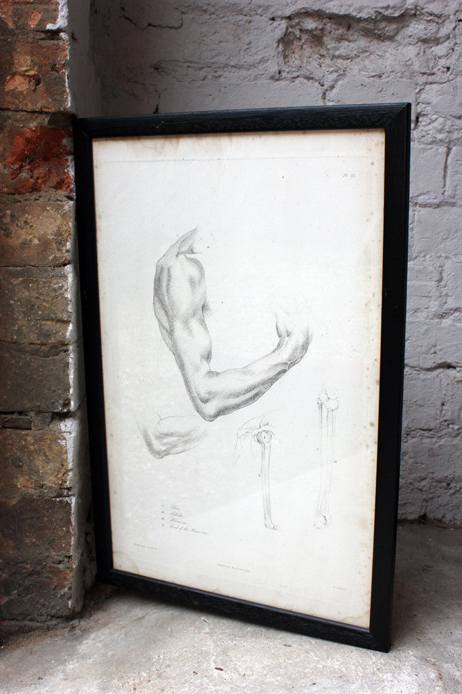 Framed Plate No.21; Anatomical Studies of Bones & Muscles, for the use of Artists; Flaxman/Landseer c.1833