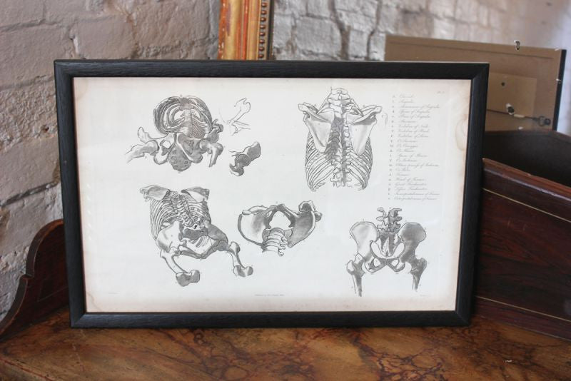 Framed Plate No.5; Anatomical Studies of Bones & Muscles, for the use of Artists; Flaxman/Landseer c.1833