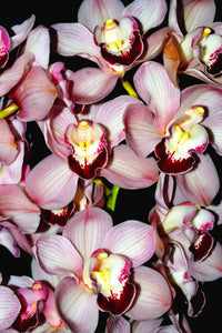 Orchid 790