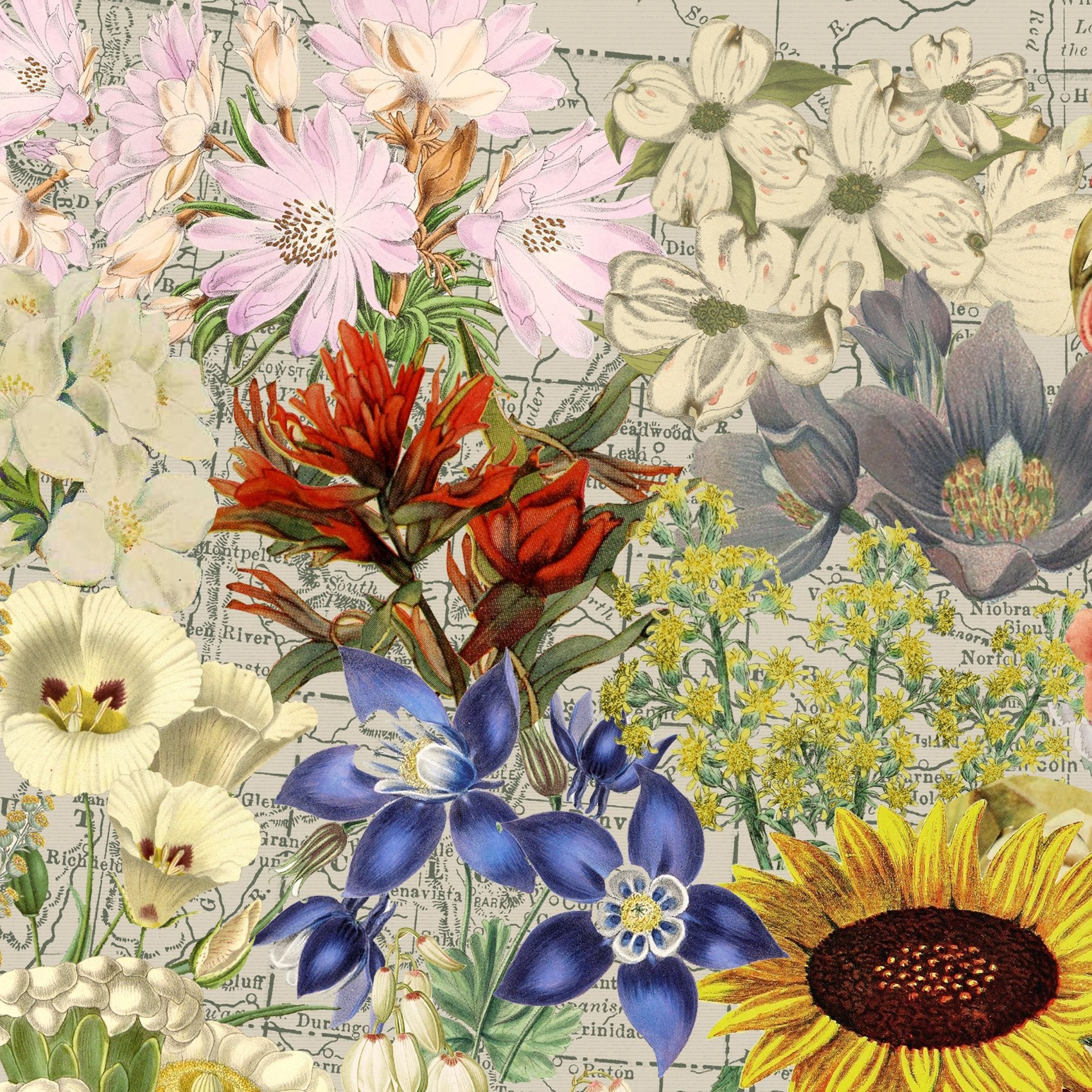 USA state flowers map art zoom