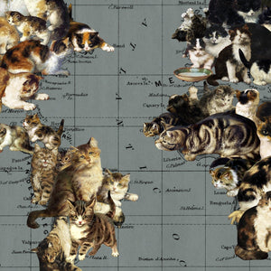 world cat map print closeup
