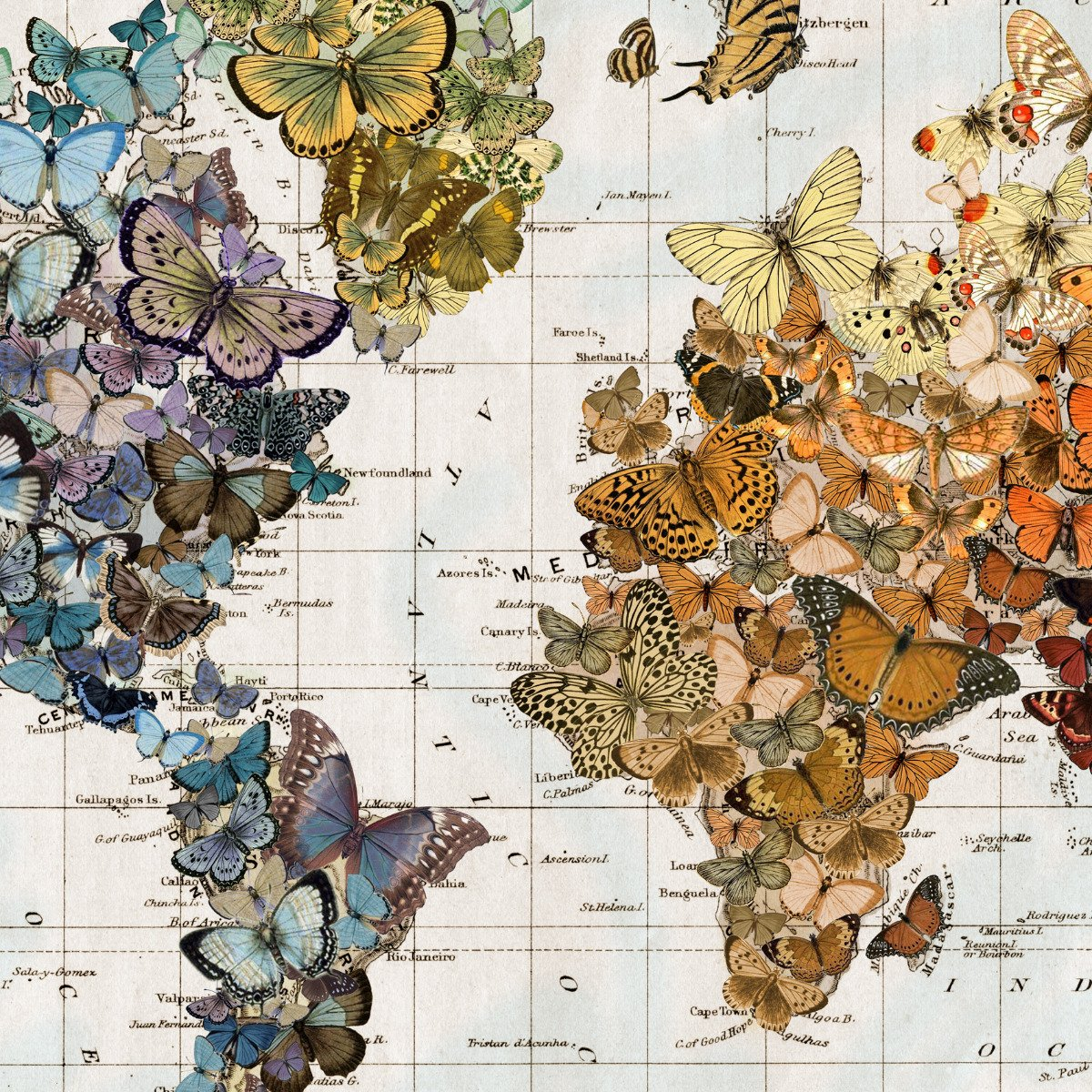 Butterfly World Map Hanging Wall Art Migration Wendy Gold