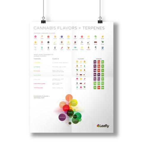 Terpene Poster - Leafly Store