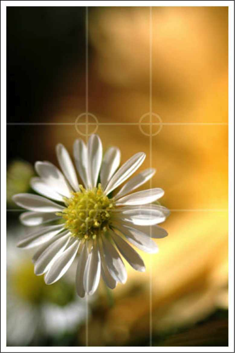 Digislider_Blog_Filming_Basics-rule-of-thirds-flower-picture
