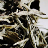 High Mountain Moon Light Beauty White PuEr (Ancient Tree Puer)  國色天香古樹月光 白普洱茶
