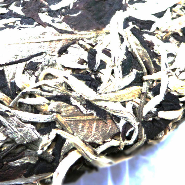 Ancient Tree Moon Light White Puer