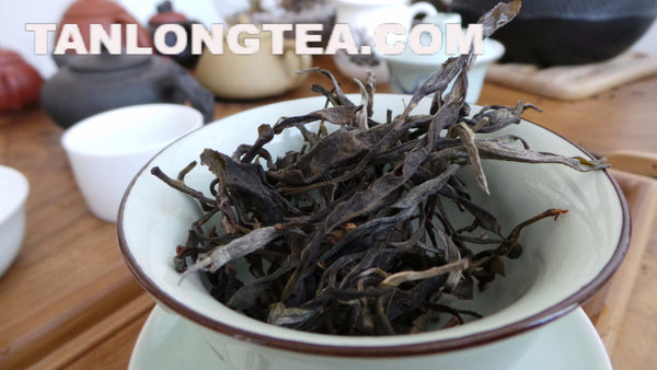 Once the Imperial Tribute Tea- Rare Mystical ManSong Valley 2015 First Flush Old Trees 曼松貢茶2015春