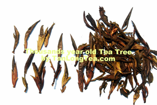 Wild Thousand Years Ancient Tree Tea Buds