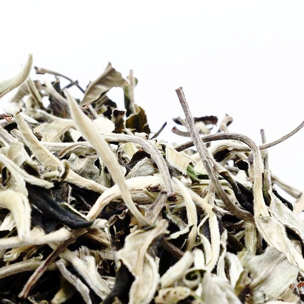 Moon Light White Tea (Ancient Tea Tree, High Mountain Tea )  國色天香古樹白茶