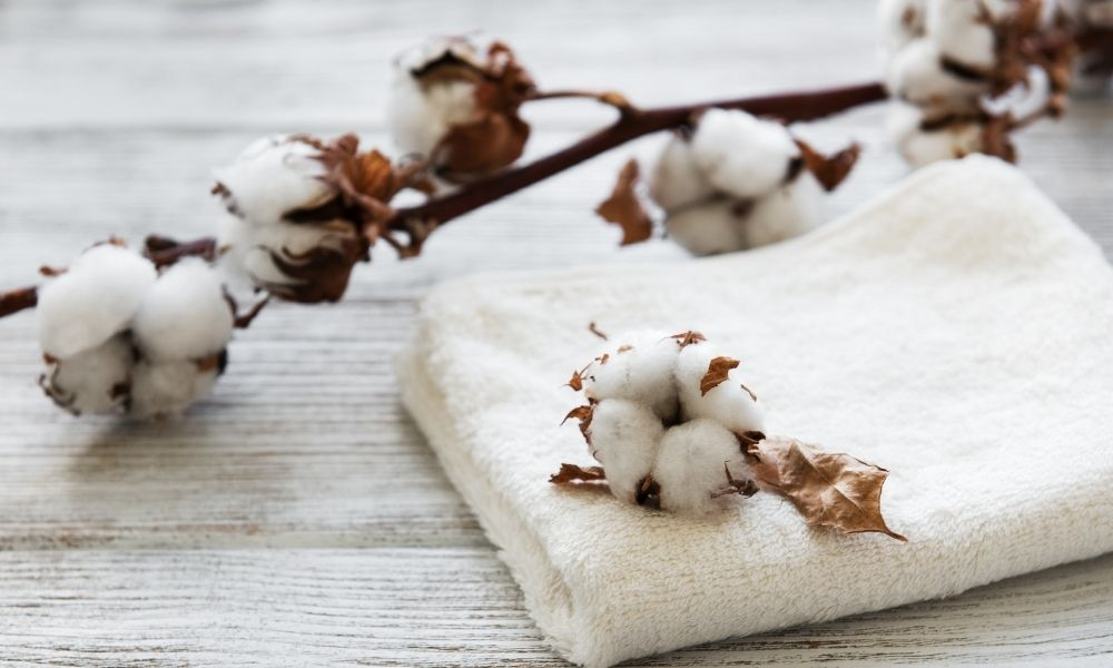 Organic vs. Conventional Cotton: The Differences