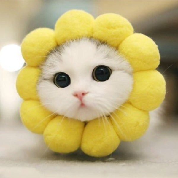 CAT SUNFLOWER 😽😸😻🐈