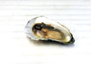 Everything You Need to Know About Blue Point Oysters