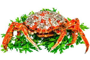 How to Prepare Live Dungeness Crab