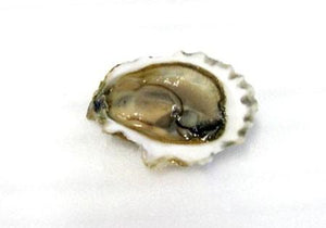 Grilled Blue Point Oyster Recipe
