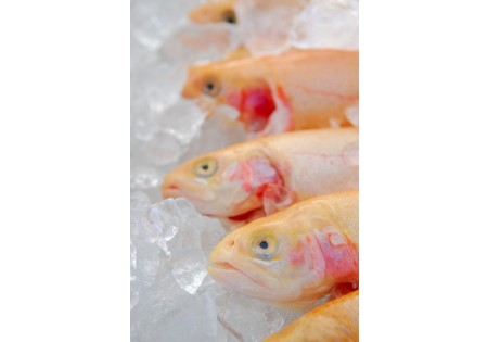 Golden Trout (Whole)