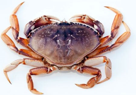 Live Dungeness Crabs for Sale