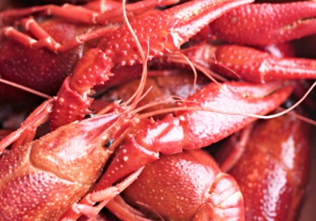 Live Pacific Red Crawfish