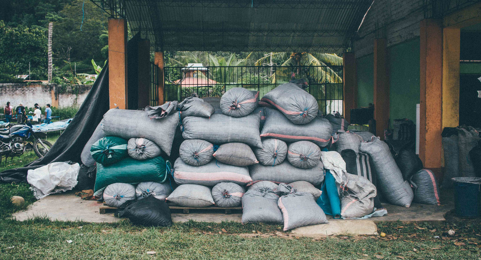 Cacao beans in sacks.