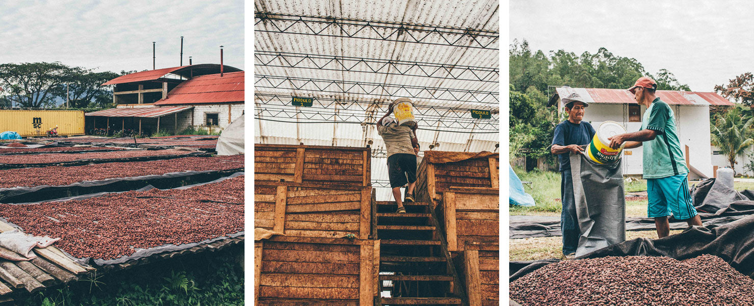 Cacao drying in drying beds at CAC Pangoa. Cacao fermentation boxes. Cooperative workers load cacao in bags for shipment.