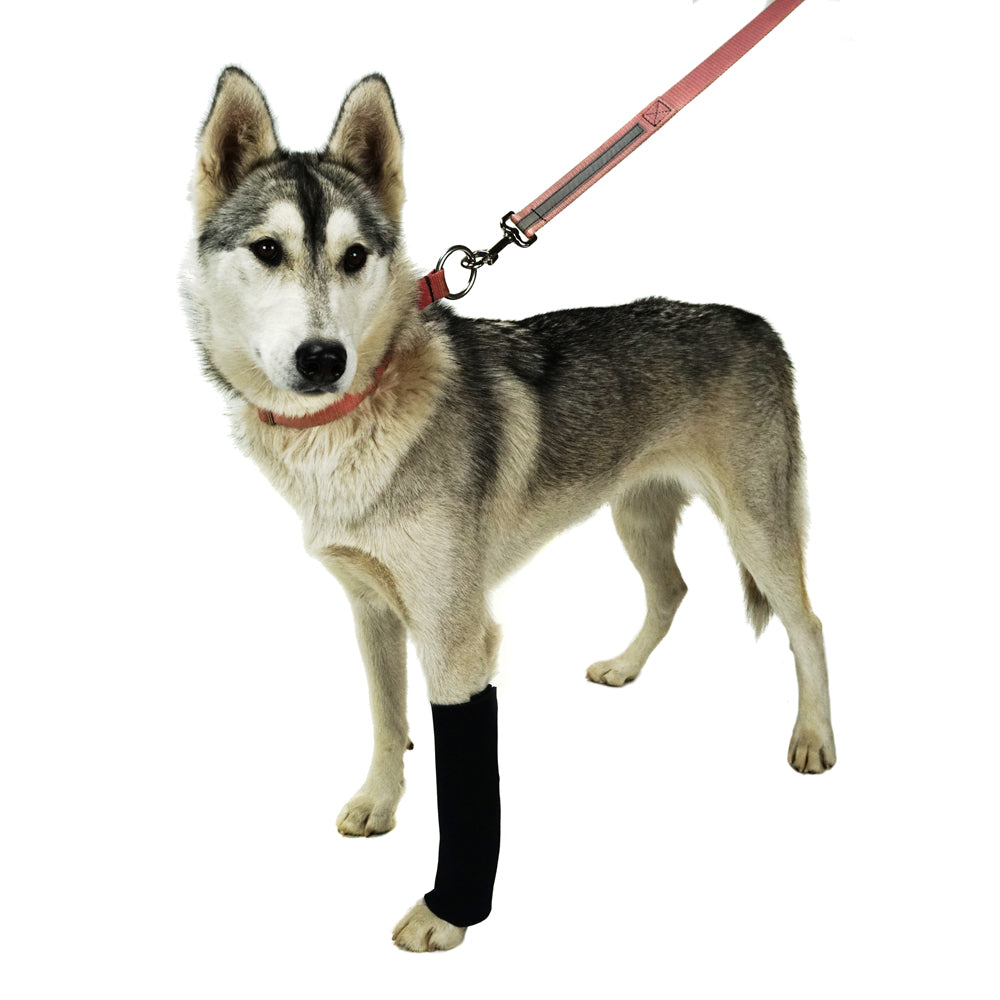 AO Canine Carpal Wraps