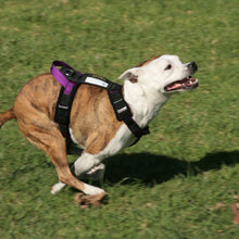 "Load image into Gallery viewer, Flyball Harness 3/4"" Webbing"