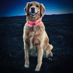 LED Illuminated Dog Collar