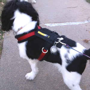 Urban Trail® Adjustable Harness (Half-Back / Shorty) - CUSTOM CRAFTED