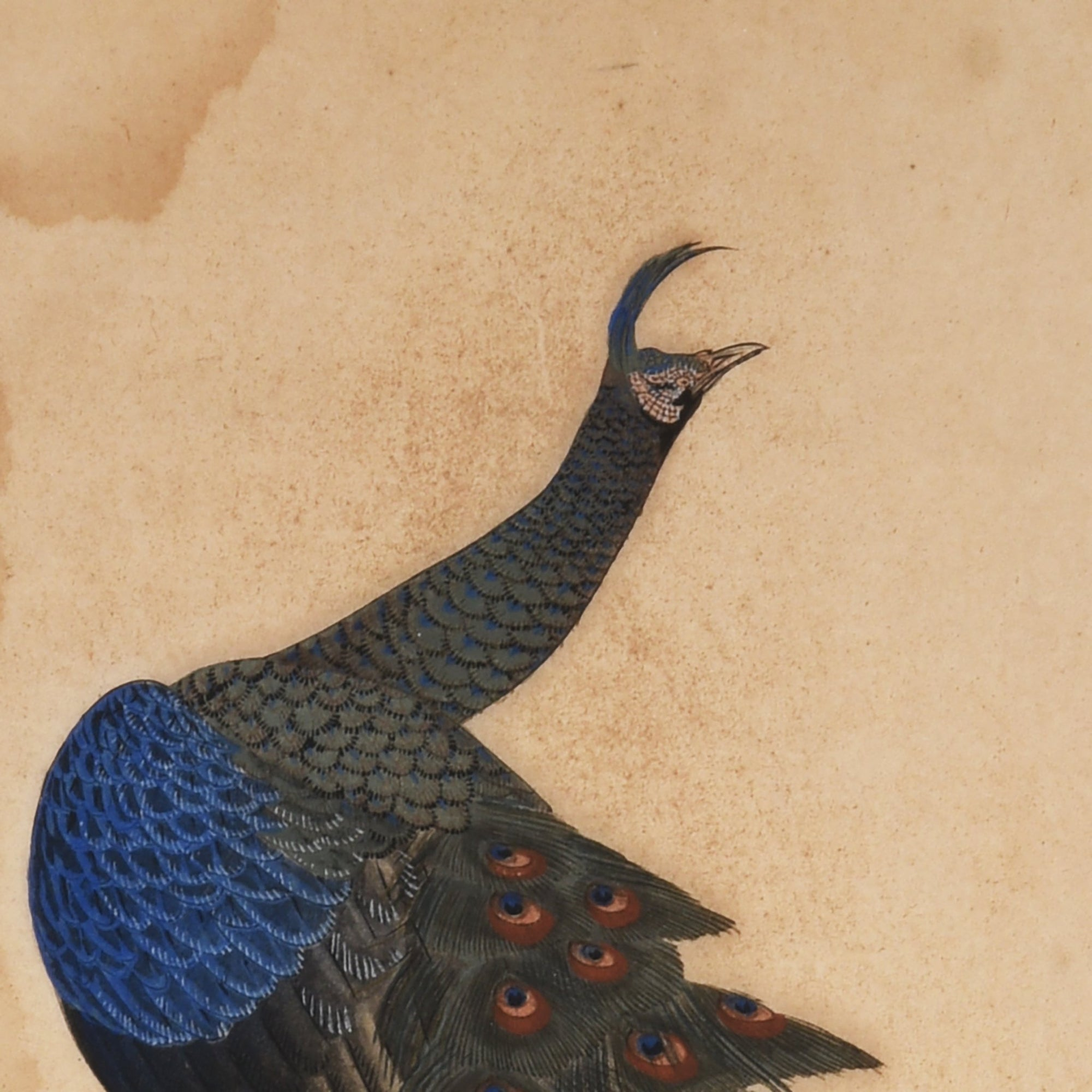 Japanese Painting of Peacock - 36 x 1.5 x 55 cms - M241